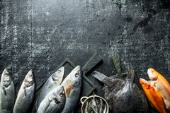 Zusammenstellung von verschiedenen frischen Fischen lizenzfreie stockfotos