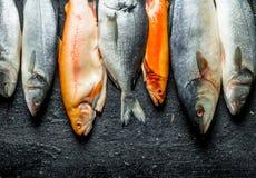 Zusammenstellung von verschiedenen frischen Fischen lizenzfreies stockfoto