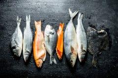 Zusammenstellung von verschiedenen frischen Fischen stockfotografie