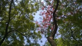 Zusammenströmen von Farben der Natur stockfoto