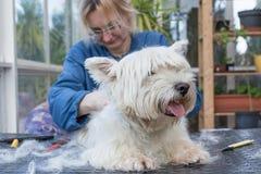 Zutaten das hintere Od der West Highland White Terrier-Hund stockfotos
