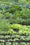 Zuteilungs-Garten-Bett Stockfotografie