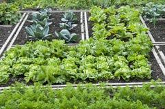Zuteilungs-Garten-Bett Stockbilder