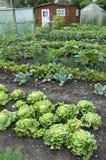 Zuteilungs-Garten-Bett Stockfoto