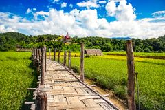 Zutongpae Bridge on rice field,Mae hong son nature background Royalty Free Stock Images