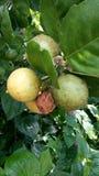 Zuur fruit royalty-vrije stock fotografie