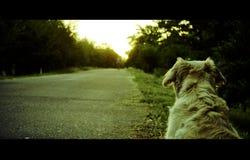 Zuverlässiger Hund Stockbild