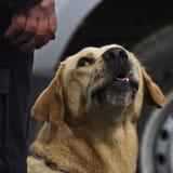 Zuverlässiger Hund Lizenzfreie Stockfotos