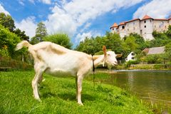 Zuzemberk Castle, Slovenian tourist destination. Stock Photos