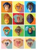 Zwölf Ikonen von Affen der unterschiedlichen Zucht im flachen Design Stockfotos