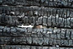 zwęglone drewno Zdjęcie Stock