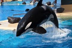 zwłoki wieloryb Zdjęcie Royalty Free