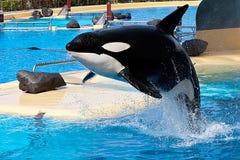 zwłoki wieloryb Obraz Royalty Free