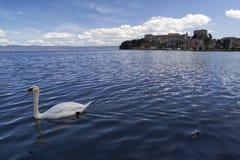 Zwaan aan het meer Royalty-vrije Stock Afbeelding