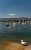 Zwaan en boten die op meer Zürich wordt vastgelegd Stock Foto