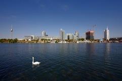 Zwaan op de rivier van Donau, Wenen Royalty-vrije Stock Foto's