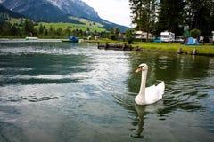 Zwaan op het water op meer Stock Foto