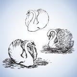 Zwaan Vector tekening Stock Afbeeldingen