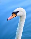 Zwaanhoofd met hals tegen blauw water Royalty-vrije Stock Afbeeldingen