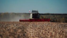 Zwaar combineer oogsten gerijpte tarwe, vooraanzicht stock videobeelden