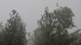 Zwaar onweer en regen Het gieten van een hoop van water De kromming van boomtakken onder de druk van een sterke vlagerige wind stock videobeelden
