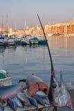 Zwaard - vissen Royalty-vrije Stock Foto