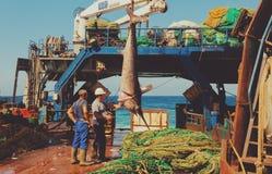 zwaardvissen Royalty-vrije Stock Afbeelding