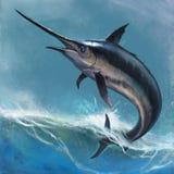 zwaardvissen Stock Afbeeldingen