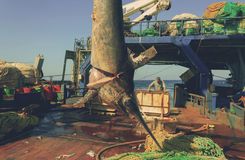 Zwaardvissen broadbills gladius Royalty-vrije Stock Foto's