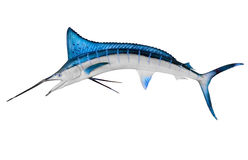 Zwaardvissen die met het Knippen van Weg worden geïsoleerdl Stock Afbeeldingen