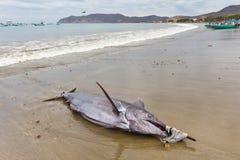 Zwaardvissen op strand, Ecuador Royalty-vrije Stock Foto