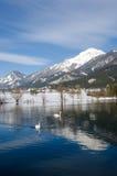Zwanen in een bergmeer Stock Foto's