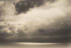 Zwanen en een donkere bewolkte hemel boven het overzees Stock Foto's