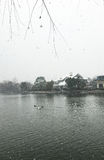 Zwanen in het meer in sneeuw Royalty-vrije Stock Afbeelding