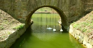 Zwanen onder een brug stock afbeelding