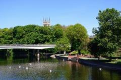 Zwanen op de rivier, Burton op Trent stock afbeeldingen