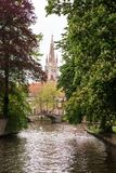 Zwanen op het meer van liefde in Brugge Stock Fotografie