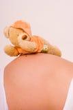 Zwanger met beer Stock Afbeelding