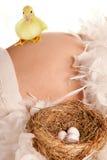 Zwangere buik met nest en eieren Stock Foto's