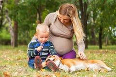 Zwangere moeder met weinig zoon die met huisdier in park spelen royalty-vrije stock foto