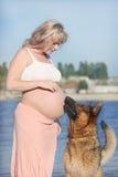 Zwangere vrouw en herdershond stock foto's