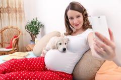 Zwangere vrouw met haar hond thuis stock foto's