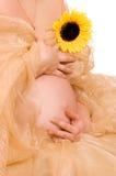 Zwangere vrouw met zonnebloem Royalty-vrije Stock Foto's