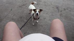 Zwangere vrouwenzitting met een hond stock footage