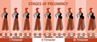 Zwangerschapsstadia van zwangere moslimvrouw met hijab en transpa Stock Fotografie