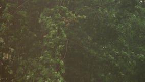 Zware de zomerregen buiten De sterke wind en de regen laten vallen blazende groene boomtakken buiten in het bos Dramatische donde stock footage