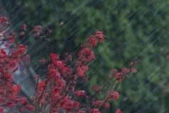 Zware regen Royalty-vrije Stock Afbeeldingen