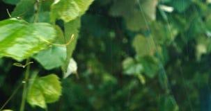 Zware regen in boomgaard stock footage
