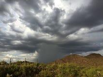 Zware regen in de woestijn Stock Afbeeldingen