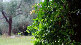 Zware regen in het park WATERDROPS CASCADE VAN GROENE BLADEREN stock footage